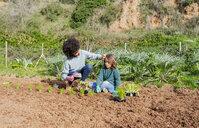 Mother and son planting lettuce seedlings in vegetable garden - GEMF02746