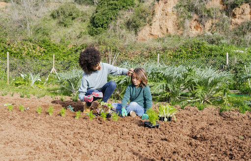 Mother and son planting lettuce seedlings in vegetable garden - GEMF02746