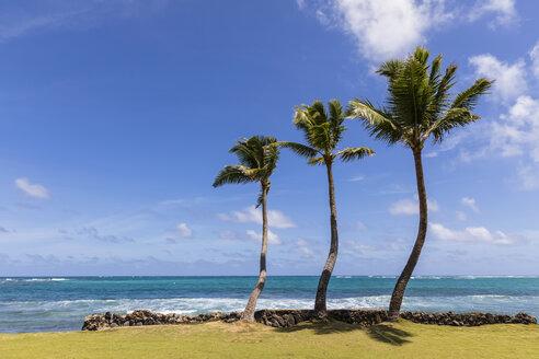 USA, Hawaii, Oahu, Hauula, Palms at the beach - FOF10346