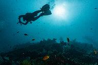 Scuba diver at wreck of USAT Liberty, Tulamben, Bali, Indonesia - ISF20851