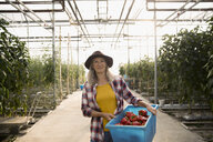 Portrait smiling, confident female farmer harvesting red bell peppers, carrying bin in greenhouse - HEROF21439