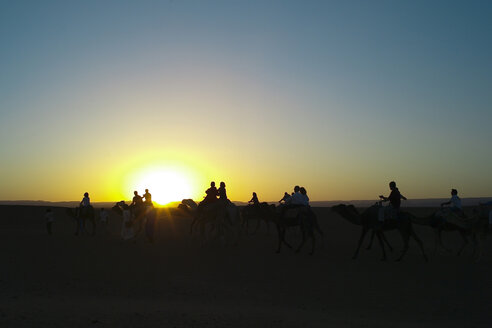 People walking on a camel at sunset in Morocco. - OCMF00280