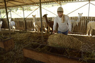Mature woman working at alpaca stable - ECPF00510