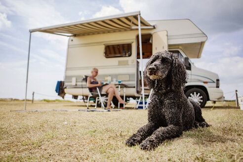 Attentive poodle lying on camping ground in front of camper - JATF01123
