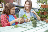 Latina sisters bundling herbs at garden table - HEROF22897