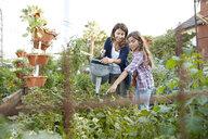 Latina mother and daughter watering plants in vegetable garden - HEROF22906