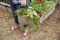 Man with bucket harvesting vegetables in garden - HEROF23155