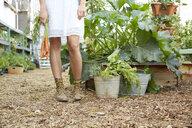 Woman in dress harvesting carrots in vegetable garden - HEROF23401