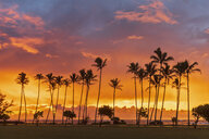 USA, Hawaii, Kauai, Pacific Ocean, Kapa'a Beach Park, palms at sunrise - FOF10417