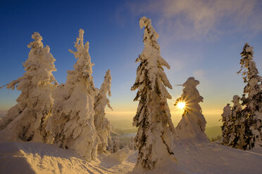 Germany, Bavaria, Bavarian Forest in winter, Great Arber, Arbermandl, snow-capped spruces at sunset - LBF02373