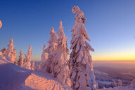 Germany, Bavaria, Bavarian Forest in winter, Great Arber, Arbermandl, snow-capped spruces at sunset - LBF02376