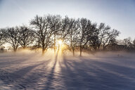 Germany, Landshut, foggy landscape in winter at sunrise - SARF04113