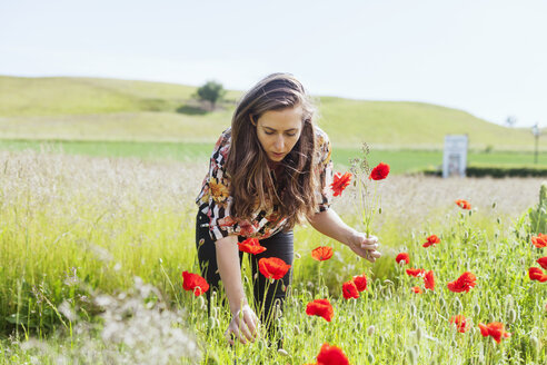 Rear view of woman holding poppy flowers on grassy field - ASTF03500