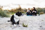 Dog relaxing on beach while female friends sitting in background - ASTF04452