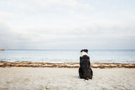 Rear view of dog relaxing on beach against sky - ASTF04464