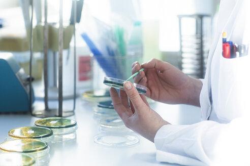 Probenauftragung auf Labortisch auf Petrischalen - SGF02288