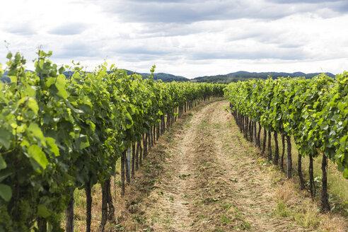 Austria, Krems-Land District, vineyard - AIF00588