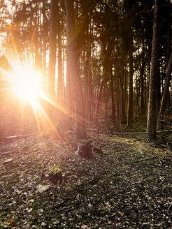 Germany, Baden-Wuerttemberg, forest near Tuebingen - LVF07838