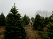 Rear view of father with sons walking amidst pine trees at farm during foggy weather - CAVF60639