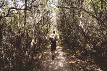Rear view of hiker with backpack and straw hat walking amidst trees in forest at Wilsons Promontory National Park - CAVF60681