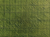 Aerial view of agricultural field during sunny day - CAVF60747