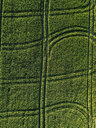 Aerial view of lush agricultural field during sunny day - CAVF60750
