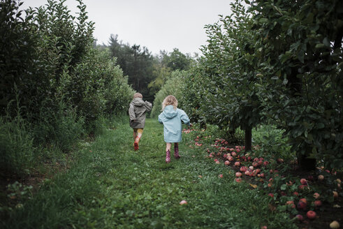Rear view of playful siblings running amidst fruit trees at apple orchard - CAVF60991