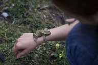 Close-up of European toad on woman's arm - MAMF00447