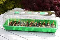 Tomato seedlings in mini greenhouse - CSF29316
