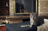 Portrait of tabby cat sitting on ottoman at home - CAVF61158