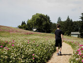 Rear view of boy walking on footpath amidst plants against sky at park during sunny day - CAVF61411