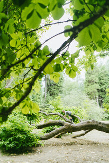Playful boy climbing on fallen tree in forest - CAVF61429