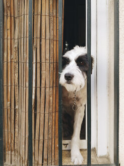 Close-up of dog looking through window - CAVF61680