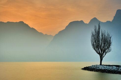 Italy, Torbole, bald tree at Lake Garda in winter - MRF01938