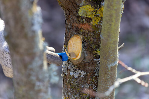 Pruning of trees with cutter - NDF00859