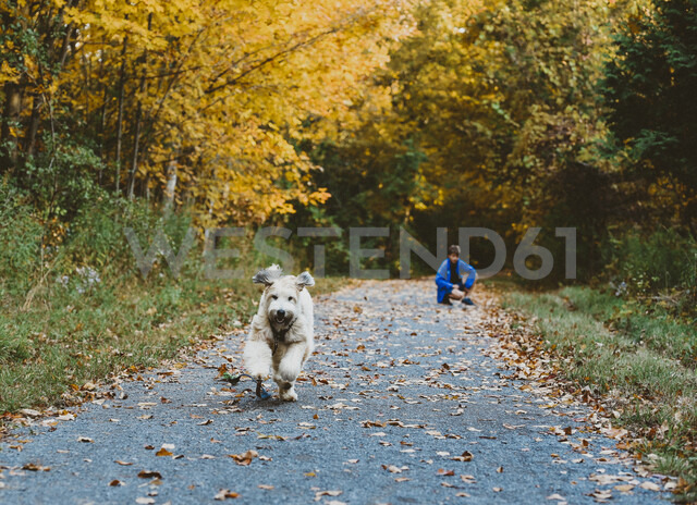 Dog running on footpath with boy sitting in background at forest - CAVF61744 - Cavan Images/Westend61