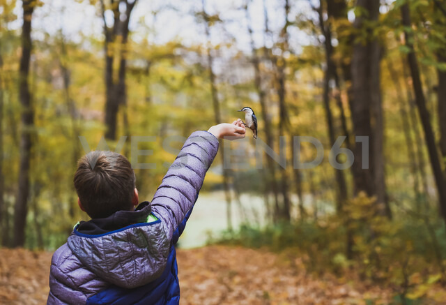 Rear view of boy feeding white breasted nuthatch in forest during autumn - CAVF61756 - Cavan Images/Westend61