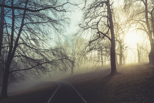 Sunrise and trees in a park, empty path - DWIF00980
