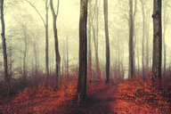 Autumn forest, red leaves - DWIF00986