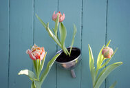 Easter decoration, flower decoration, tulips in funnel - GISF00394