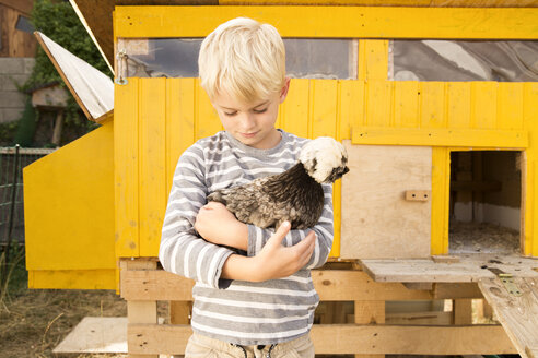 Boy holding Polish chicken at chickenhouse in garden - MFRF01236