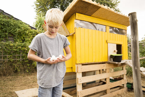 Boy holding eggs at chickenhouse in garden - MFRF01239