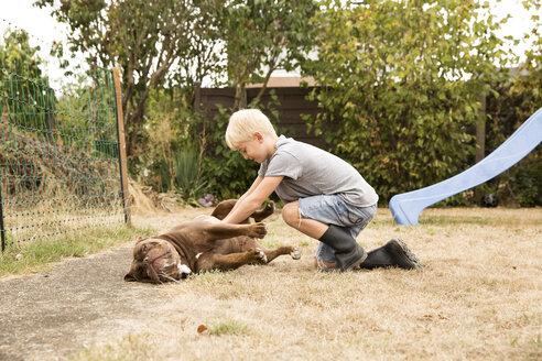 Deutschland, NRW, Garten, Hund, Old English Bulldog, Junge krault Hund der auf dem Boden liegt, Wiese - MFRF01272