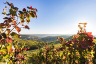 Germany, Baden-Wuerttemberg, Stuttgart, view over grapevines to Uhlbach - WDF05183