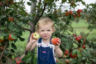 Portrait of cute girl eating apples while standing against fruit trees at farm - CAVF62095