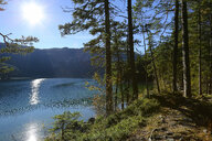 Germany, Bavaria, Eibsee Lake , forest - DLF00049