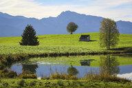Germany, Bavaria, Fuessen, Alpine foreland - DLF00055