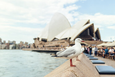 Australia, New South Wales, Sydney, seagull with the Sydney Opera House in the background - KIJF02360