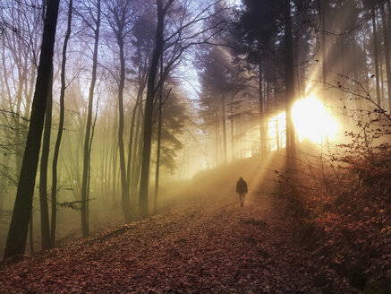 Germany, Rhineland Palatinate, Palatinate Forest, man walking and relaxing in foggy forest with sunbeams - GWF05929