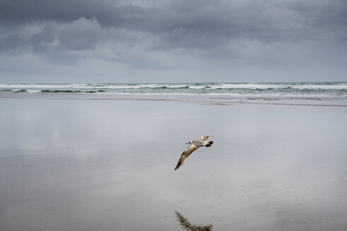 Bird flying at beach against cloudy sky - CAVF62327